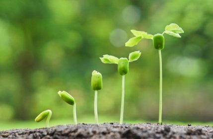 Agile Fluency & Organizational Maturity
